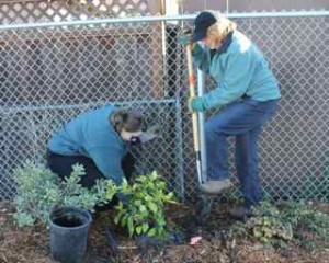 ways-to-be-a-good-neighbor-tree-plantings-good-neighbor-stories-pam-marino